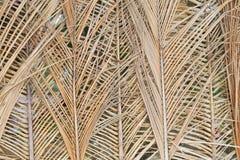 Foglie di palma asciutte Fotografia Stock