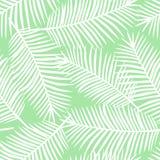 Foglie di palma bianche su un PA senza cuciture esotico del fondo verde chiaro Fotografia Stock Libera da Diritti