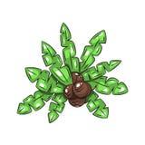 Foglie di palma con le noci di cocco Immagine Stock