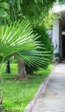 Foglie di palma del vicolo della via Immagini Stock