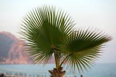 Foglie di palma dell'albero al sole Immagine Stock Libera da Diritti