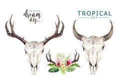 Foglie di palma della Boemia del cranio e di tropico della mucca dell'acquerello Mammiferi occidentali dei cervi Corni tropicali  illustrazione vettoriale