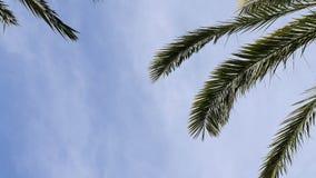 Foglie di palma della data e fondo delle nuvole di bianco stock footage