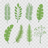 Foglie di palma e foglie tropicali della giungla Insieme delle illustrazioni d'avanguardia su a quadretti trasparente Immagine Stock