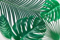 Foglie di palma fresche tropicali creative Estate minimo Immagini Stock Libere da Diritti