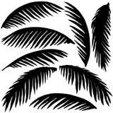 Foglie di palma nere Fotografie Stock Libere da Diritti
