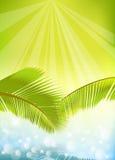 Foglie di palma sopra acqua Fotografia Stock
