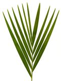 Foglie di palma su bianco Immagini Stock