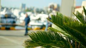 Foglie di palma su fondo vago porto marittimo con gli alberi bianchi degli yacht e delle navi in mare stock footage