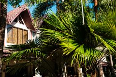 Foglie di palma sui precedenti della costruzione dell'hotel Fotografia Stock Libera da Diritti