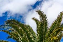 Foglie di palma sul fondo del cielo blu Fotografia Stock Libera da Diritti