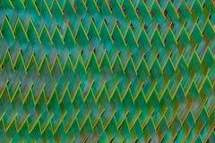Foglie di palma tessute Immagine Stock