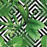Foglie di palma tropicali della pianta esotica della giungla Fotografia Stock Libera da Diritti
