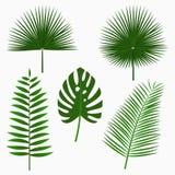 Foglie di palma tropicali, insieme della foglia della giungla isolato su fondo bianco Piante esotiche Vettore illustrazione di stock