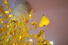 Foglie di pho dell'oro che appendono sull'albero dorato Immagine Stock Libera da Diritti