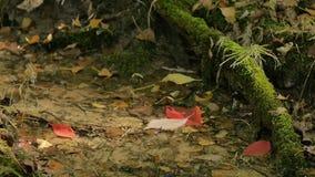 Foglie di rosso che cadono in Forest Stream stock footage
