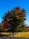 Foglie di rosso dell'albero Fotografie Stock