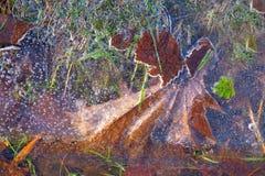 Foglie di rosso di autunno sotto il ghiaccio Immagini Stock Libere da Diritti