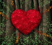 Foglie di rosso di giorno di biglietti di S. Valentino Immagine Stock
