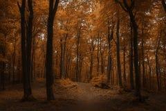 Foglie di rosso e bella luce nella foresta scura Fotografia Stock Libera da Diritti