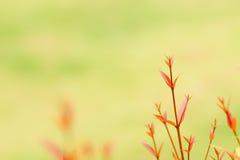 Foglie di rosso sulla cima dell'albero immagini stock
