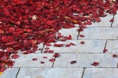 Foglie di rosso sulla pavimentazione Immagini Stock Libere da Diritti