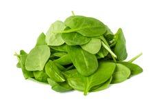 Foglie di spinaci isolate su fondo bianco Fotografie Stock