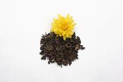 Foglie di tè con il fiore giallo Fotografie Stock Libere da Diritti