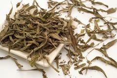 Foglie di tè prudenti Immagini Stock Libere da Diritti
