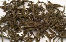 Foglie di tè prudenti Fotografia Stock