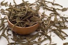 Foglie di tè prudenti Immagini Stock