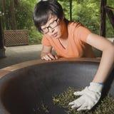 Foglie di tè dell'arrosto della donna Fotografie Stock