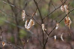 Foglie di tempo di primavera vecchie fotografia stock