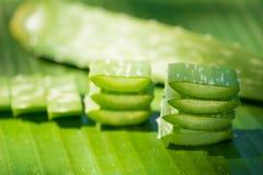 Foglie di vera dell'aloe su verde Fotografia Stock