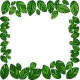 Foglie di verde Immagini Stock Libere da Diritti