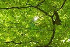 Foglie di verde Fotografie Stock