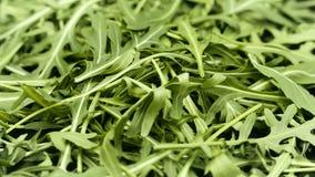foglie di verde del primo piano di rucola Fotografia Stock