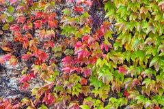 Foglie di verde e dell'arancia Fotografia Stock Libera da Diritti