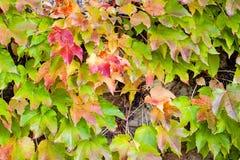 Foglie di verde e dell'arancia Fotografie Stock Libere da Diritti