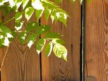 Foglie di verde su fondo di legno Immagini Stock Libere da Diritti