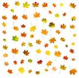 75 foglie differenti Fotografia Stock Libera da Diritti