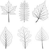 Foglie differenti degli alberi Buon disegno Fotografia Stock Libera da Diritti
