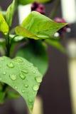 Foglie dopo pioggia Immagini Stock