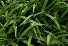 Foglie dopo pioggia Fotografie Stock Libere da Diritti