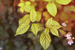 Foglie dorate in autunno fotografia stock libera da diritti