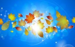 Foglie dorate di autunno Immagini Stock