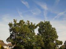 Foglie dorate luccicanti al di sotto di bello cielo blu profondo Immagini Stock Libere da Diritti