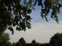 Foglie dorate luccicanti al di sotto di bello cielo blu profondo Immagine Stock