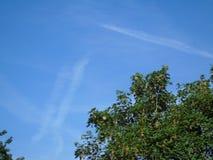 Foglie dorate luccicanti al di sotto di bello cielo blu profondo Immagini Stock