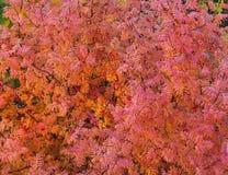 Foglie e barries rossi della sorba di autunno fotografia stock